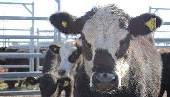Vacas sostienen valores en Liniers