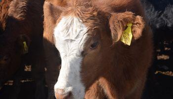 De Angeli propone crear créditos a valor producto para la ganadería