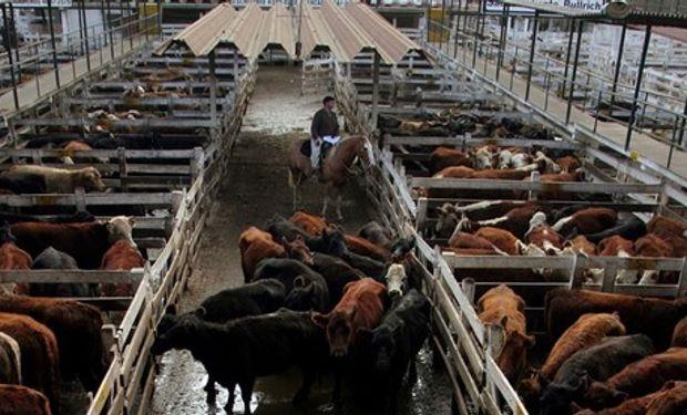 Vacas y toros operaron con valores sostenidos.