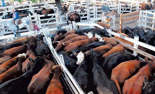El final de las operaciones en el mercado de Liniers encontró una oferta por debajo de los 10 mil animales.