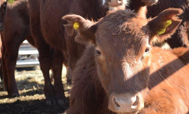Se busca de cara al 2025 lograr una situación productiva alineada con el resto de los países ganaderos referentes en el mundo.