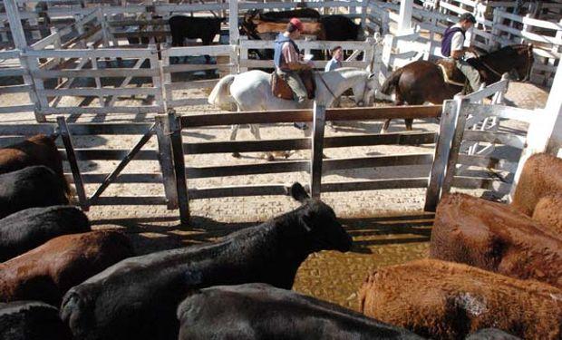 Fue determinante las condiciones de los buenos animales subastados, estableciendo una plaza con mejoras.