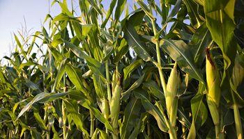 Soja, trigo y maíz: qué pasó con los precios en 2020 y los factores que mira el mercado