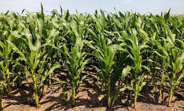 En tres meses se negociaron 9 millones de toneladas de granos en el mercado de futuros y opciones local