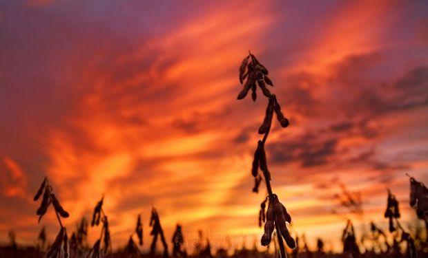 Gracias al buen clima avanzó la trilla de soja en la Argentina, pero todavía continúa muy retrasada respecto del promedio.