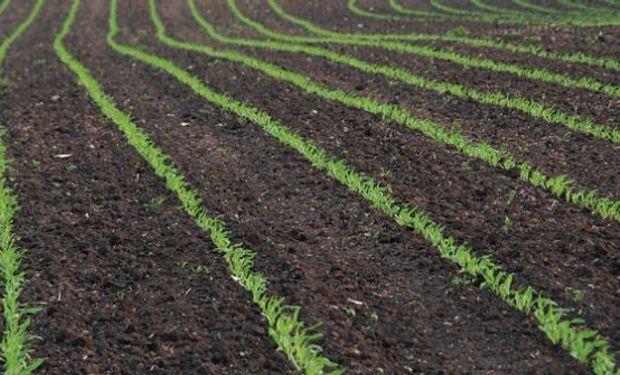 Mercado de granos, con nuevos interrogantes