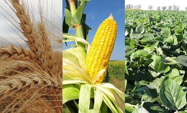 """Mercado """"divorciado"""" para el trigo, """"patético"""" para el maíz y """"optimista"""" para la soja"""