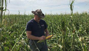 En 10 gráficos: la oferta y la demanda global de soja, trigo y maíz en la nueva campaña