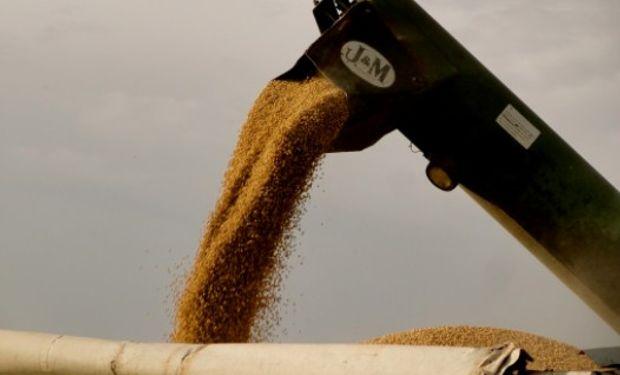 Recorte. La Bolsa de Cereales de Buenos Aires proyectó que la cosecha de soja sería de apenas 44 millones de toneladas.