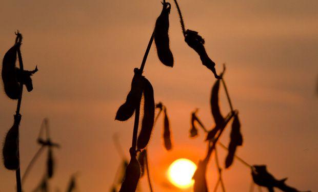 Chicago: la soja cayó más de US$ 20 la tonelada en un día, cerrando la primera semana negativa del 2021