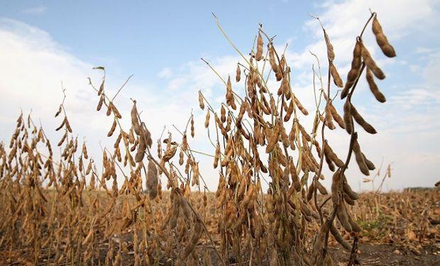 Máximo en más de un mes para la soja en Chicago: los cereales acompañan la tendencia positiva