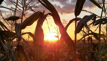 La sequía en múltiples países productores impulsa al precio de la soja, el trigo y el maíz