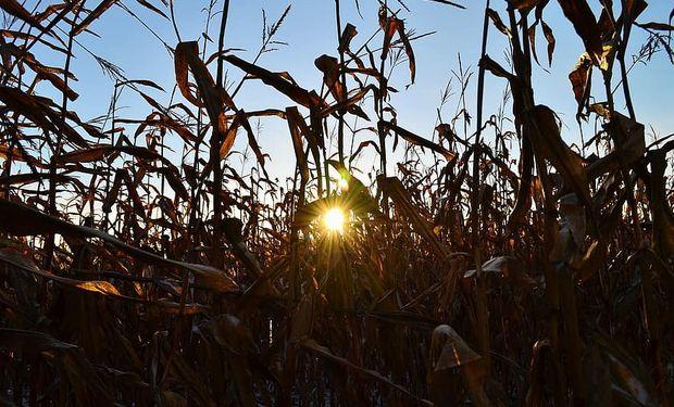 Fuerte suba para el precio del maíz en la previa a un importante informe