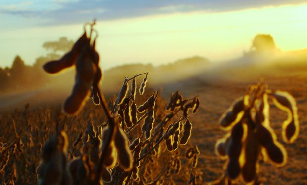 Un respiro para el mercado de granos