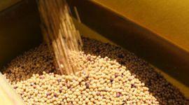 Sorpresa alcista: cómo impactó sobre los precios locales la fuerte suba para soja, trigo y maíz de Chicago