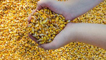 El maíz recortó la fuerte suba y el trigo siguió de cerca las retenciones móviles que aplicó Rusia