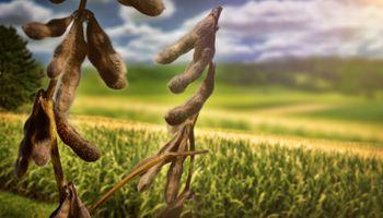 Alcista: analista anticipa el precio que podría alcanzar la soja para mayo