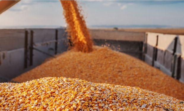 La soja y el maíz caen en Chicago tras la recuperación del lunes