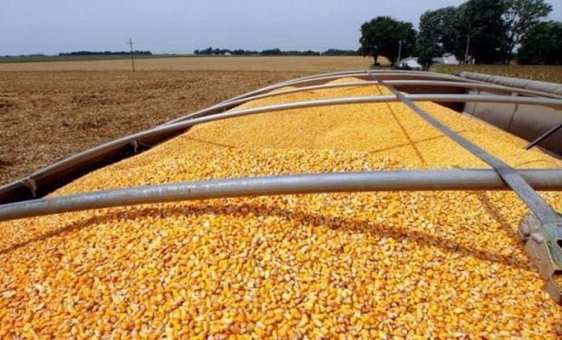 En números: a dos meses de cerrar la campaña, había casi 10 millones de toneladas de maíz en stock