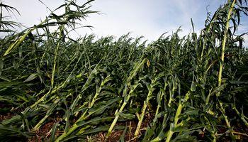 Soja y maíz: los gráficos que mira el mercado en medio del rally alcista