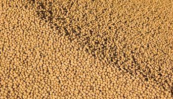 El precio de la soja sube en Chicago gracias a nuevas compras de China