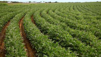 La demanda sigue en niveles muy elevados: fuerte repunte para soja, trigo y maíz