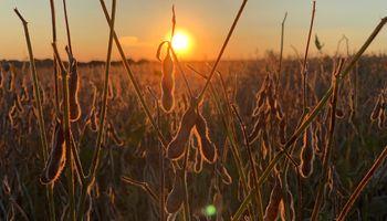 La soja superó los US$ 600 la tonelada: los 4 factores alcistas que mira el mercado de granos