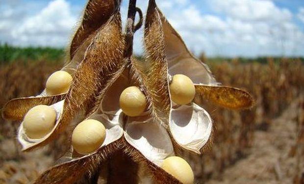 CBOT: bajas de hasta 9 dólares para la soja
