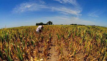 Soja, trigo y maíz: factores alcistas, bajistas y dudas que impactan sobre los precios