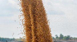 Informe del USDA: cómo impactan en soja, trigo y maíz los datos de abril