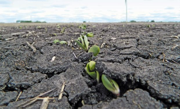 Cómo impactó sobre los precios de la soja, el trigo y el maíz el informe del USDA