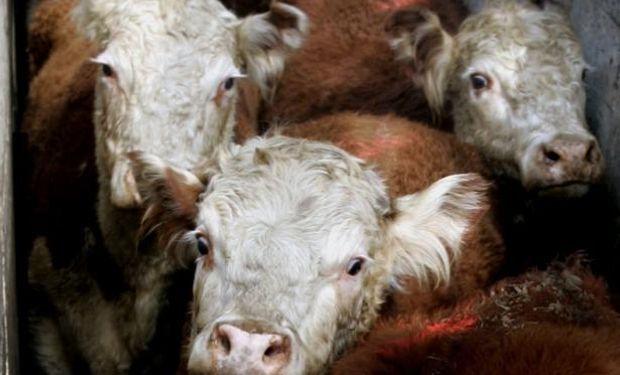 La falta de ganado preparado empuja los precios al alza.