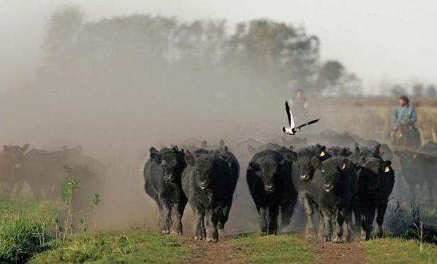 Uruguay: mercado ganadero busca equilibrio