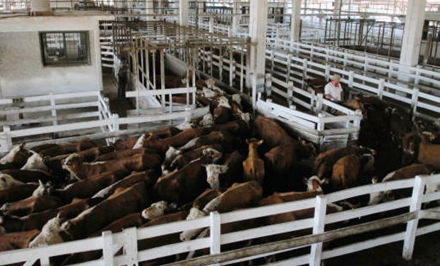 La actividad finalizo el viernes con una oferta moderada y un acumulado de 29.391 animales a lo largo de la semana en Liniers.