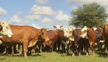 """Capacitación virtual: """"Comercialización de Ganado Para Carne"""""""