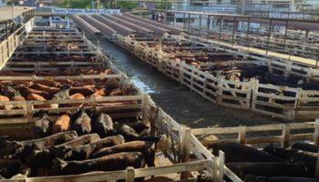 La vaca se mueve al ritmo de China y el consumo interno mantiene los valores