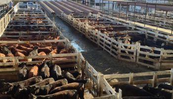 Sentimiento negativo en los mercados ganaderos