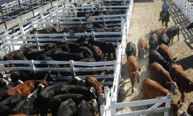 ¿Qué pasó en los mercados ganaderos durante la última semana?