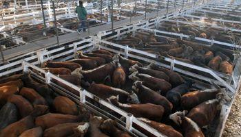 Mercado de Liniers: subas para la vaca frente a la demanda exportadora