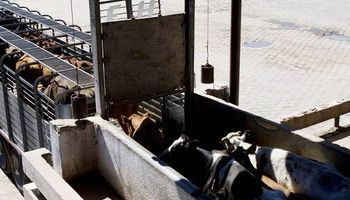 Liniers: la hacienda liviana siente la caída en el consumo de carne