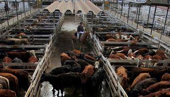 Liniers: subas de hasta 40 centavos para los terneros
