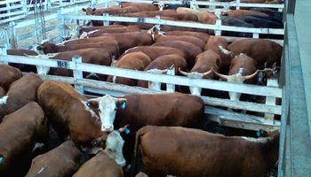 Sube la vaca en Liniers: cómo variaron los precios desde marzo hasta hoy