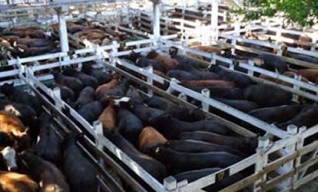 La vaca mantuvo un sostenido interés en Liniers