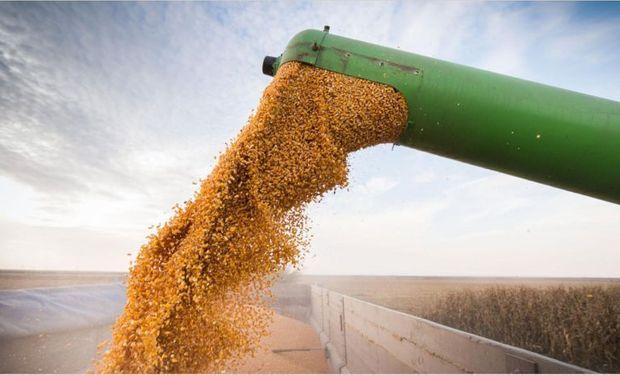 El maíz lideró las bajas de Rosario a la espera de un informe clave