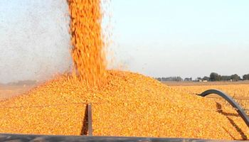 En el mercado de granos local mejoró la oferta por el maìz 2020/21