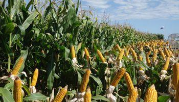 Solicitan liberar saldo exportable de maíz
