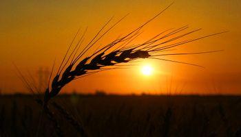 Subas para soja, trigo y maíz en Chicago: se suma la debilidad del dólar en Estados Unidos