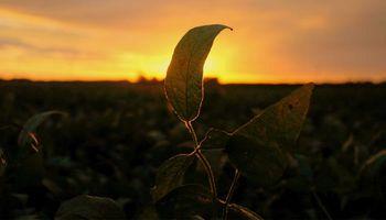 Los granos terminan la semana en terreno positivo