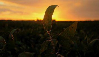 Las tres preocupaciones de los mercados agrícolas globales