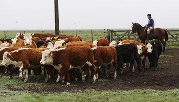 Zafra de terneros 2020: los precios en medio de la demanda de feedloteros